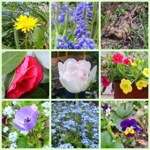bloemen collage